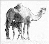 black and white pencil sketch